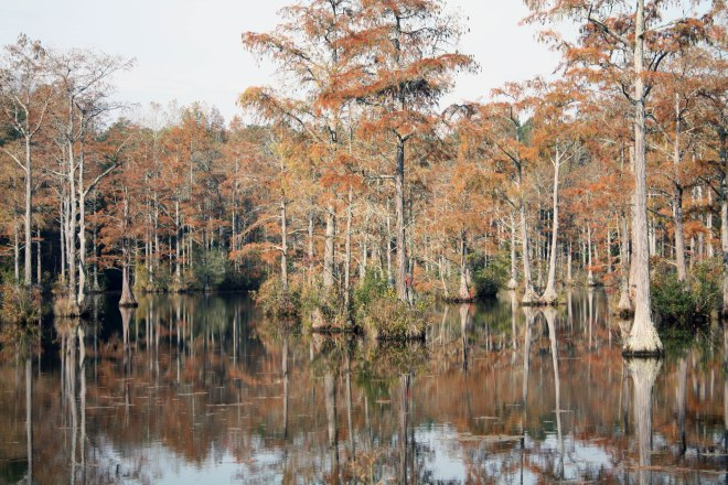 Fall Leaves on the Trees in the Marsh North Carolina Alaynas Creations